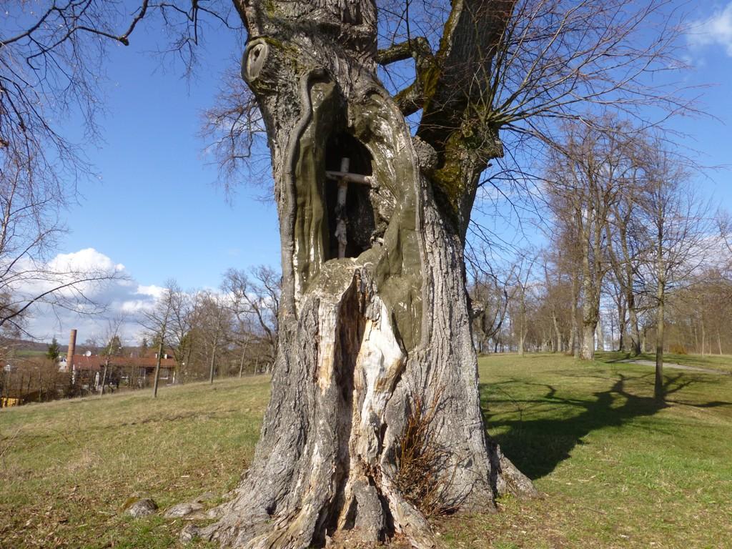Baum Schießberg